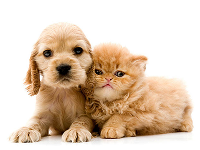 insure our pets